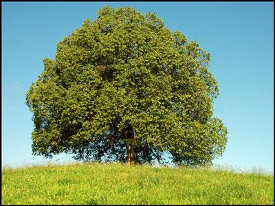 11 les arbres prennent le gaz carbonique qu on jette et le fait